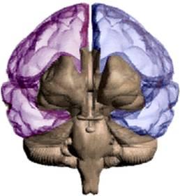 Rotační pole kolem hlavy